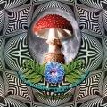 V.A / The Mushroom Speaks
